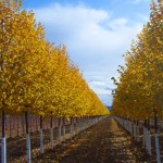 slideshow-fall-greenspire